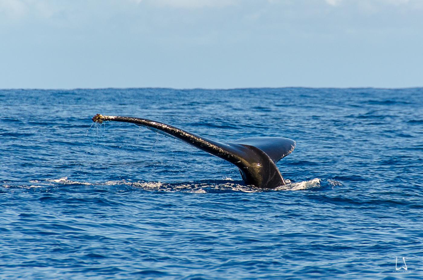 Baleines Pierre (187 sur 223)-2