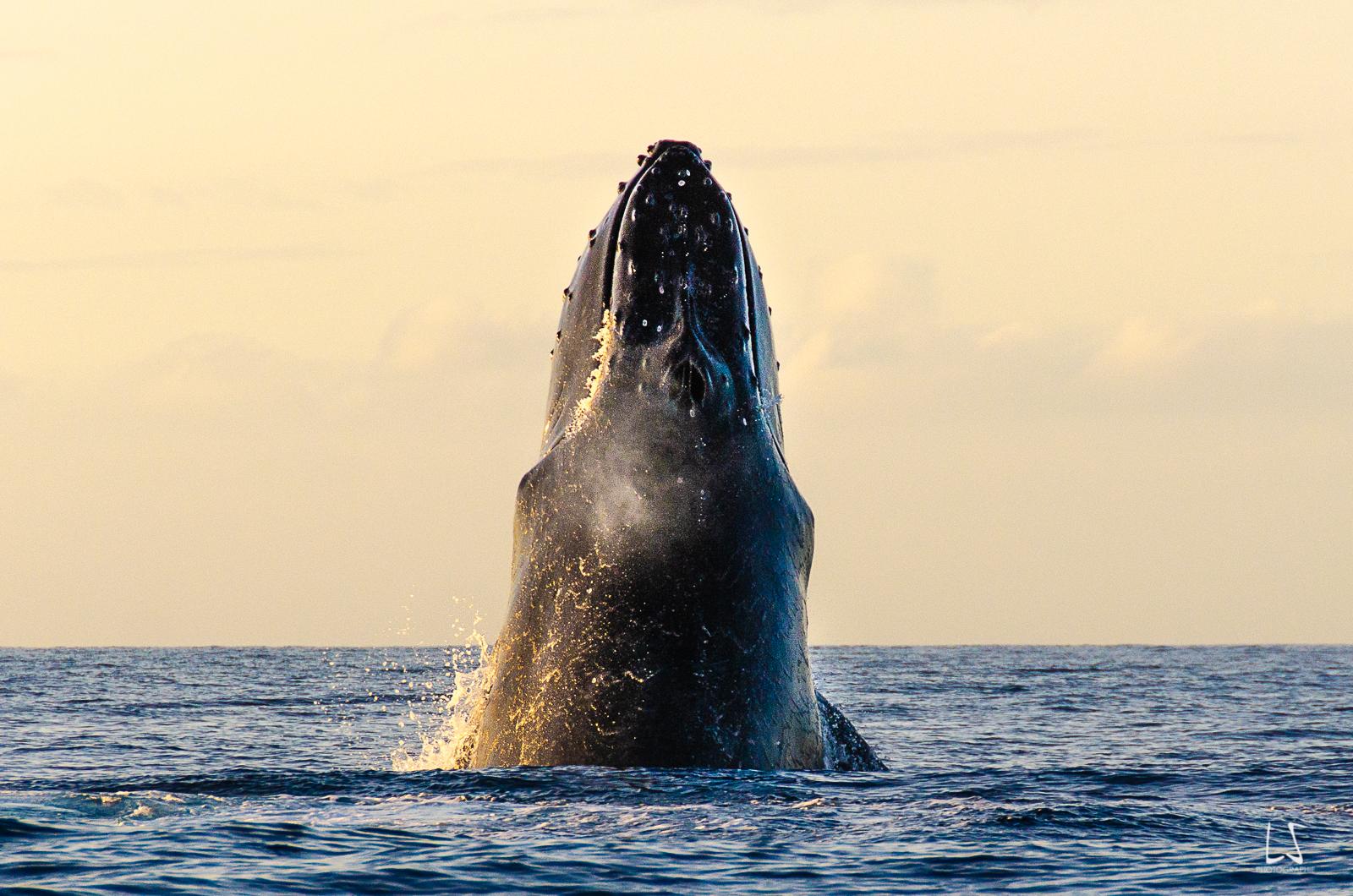 Baleines Mado (70 sur 161)-3